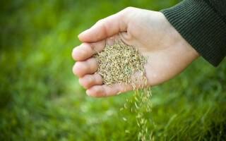 Как выращивать травы с учетом их требований?