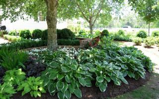 10 теневыносливых растений для приусадебного участка