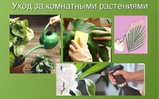 Естественные способы ухода за комнатными растениями