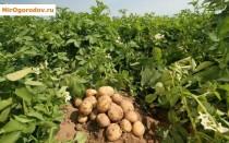 4 способа, как подкислить почву для растений на участке, таблица ph почвы