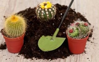 Какой грунт подходит для кактусов, как его сделать своими руками и как выбрать покупную почву